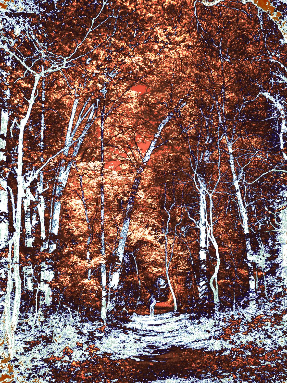 - Orange and White Forest <p> First, you remove the trees. <br>   When they are gone, other things fill in the gaps. <br>   We're not out of the woods yet. - exhibit in San Francisco - - - art  - photography - by Tony Karp