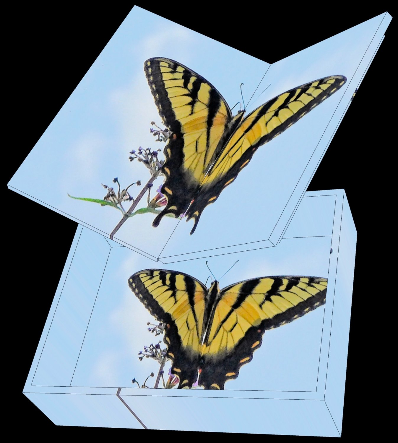 - a rendering that shows the butterfly box and its lid. - - art  - photography - by Tony Karp