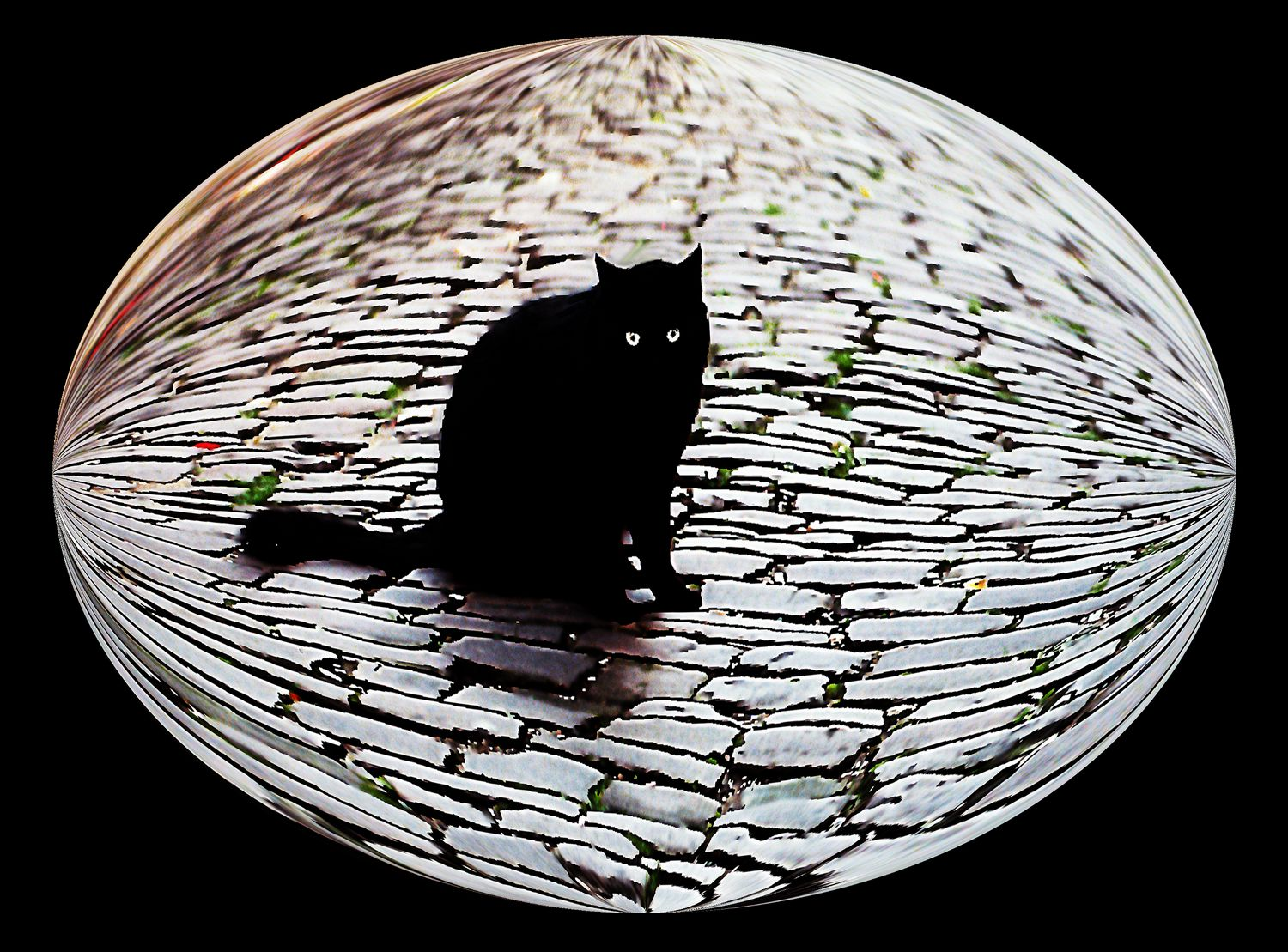 -  A cat in Cordes sur Ciel represents all of the cats in France - Bubble Pictures - made with Wilkington-Smythe