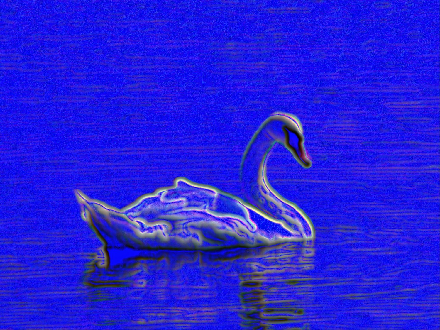 electric swan - Electric  Swan<p>   Electric Swans are very common in the northeast. <br>   And that is all I can say here, except that we have fewer power outages.  - exhibit in San Francisco - - - art  - photography - by Tony Karp