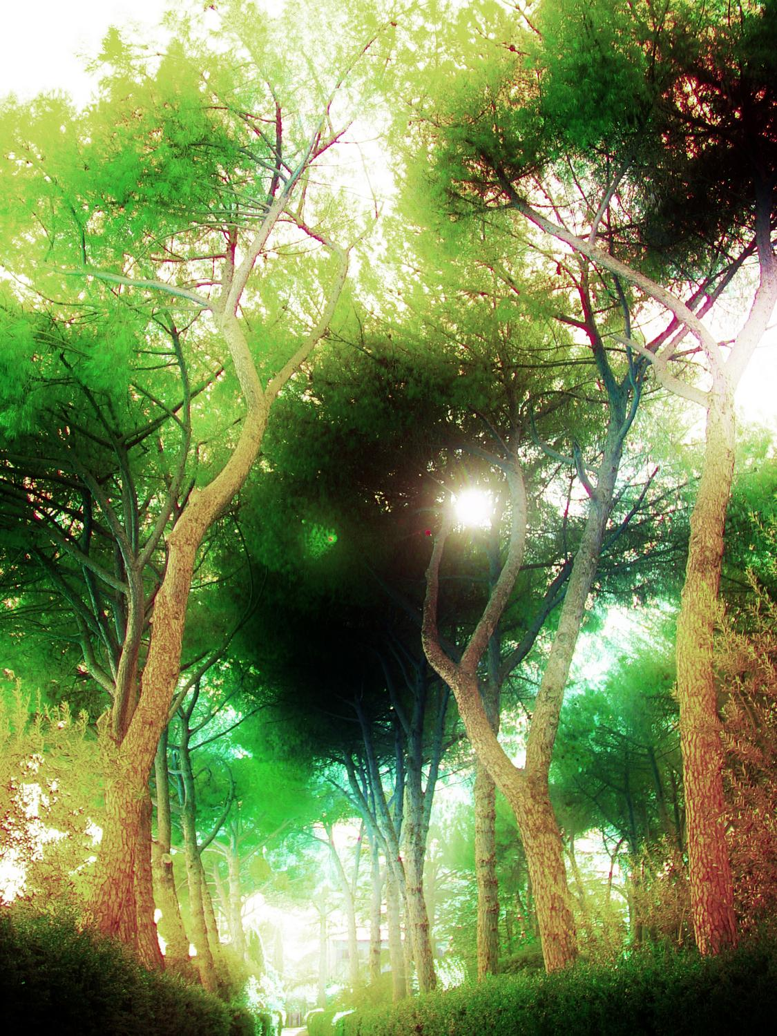 - A fantasy scene of light and trees  along the Via Appia Antica - A trip to Rome - by Tony Karp - Rome - Vatican - Gubbio - Viterbo - Spoleto - - - art  - photography - by Tony Karp