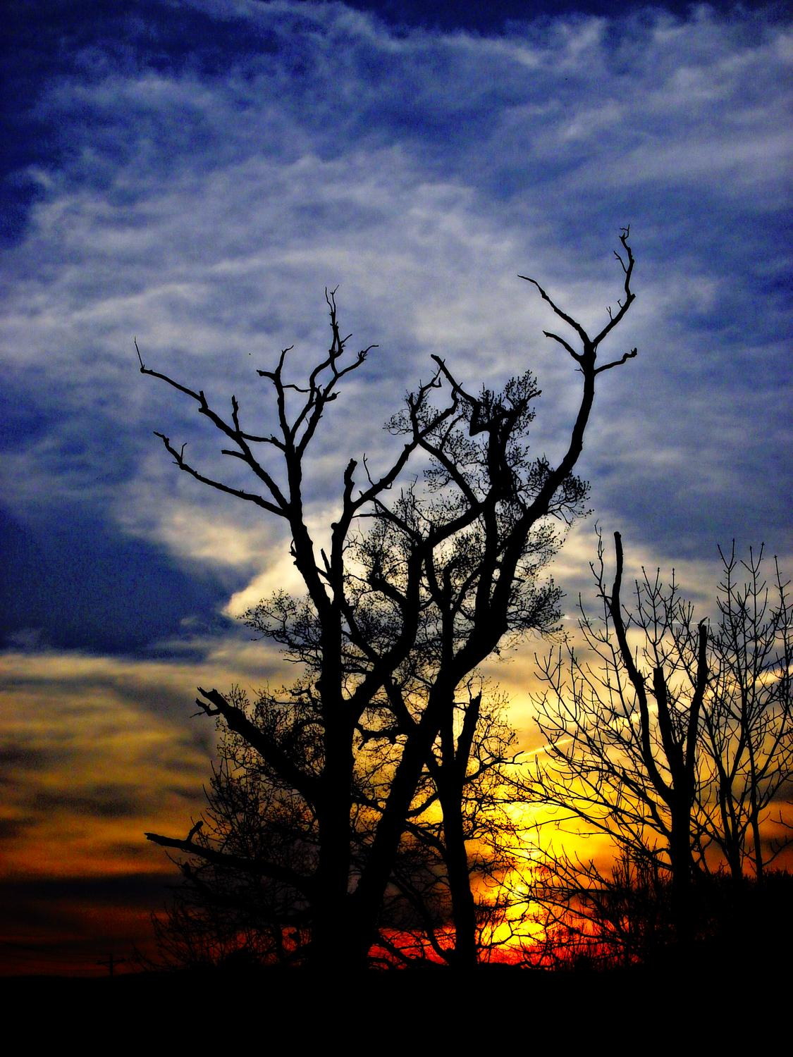 Sunset in the Graveyard of Trees - Bull Run Regional Library - - art  - photography - by Tony Karp