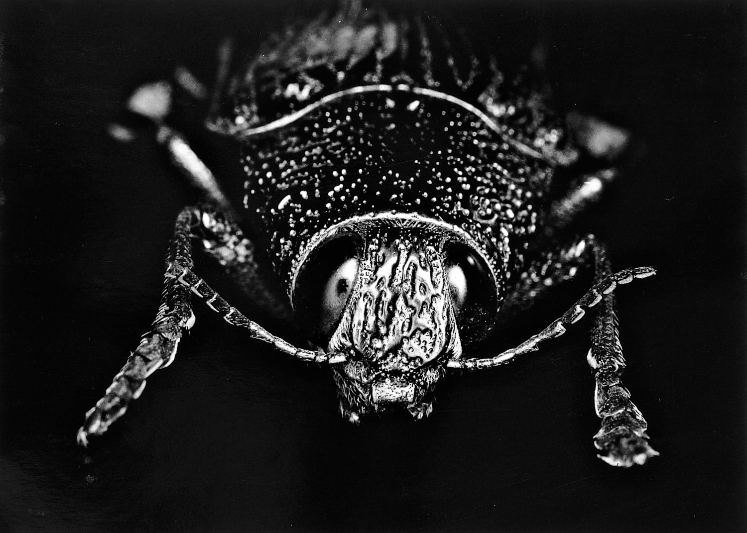 - A studio shot of the fifth beetle - My pictures taken in my studio - - art  - photography - by Tony Karp