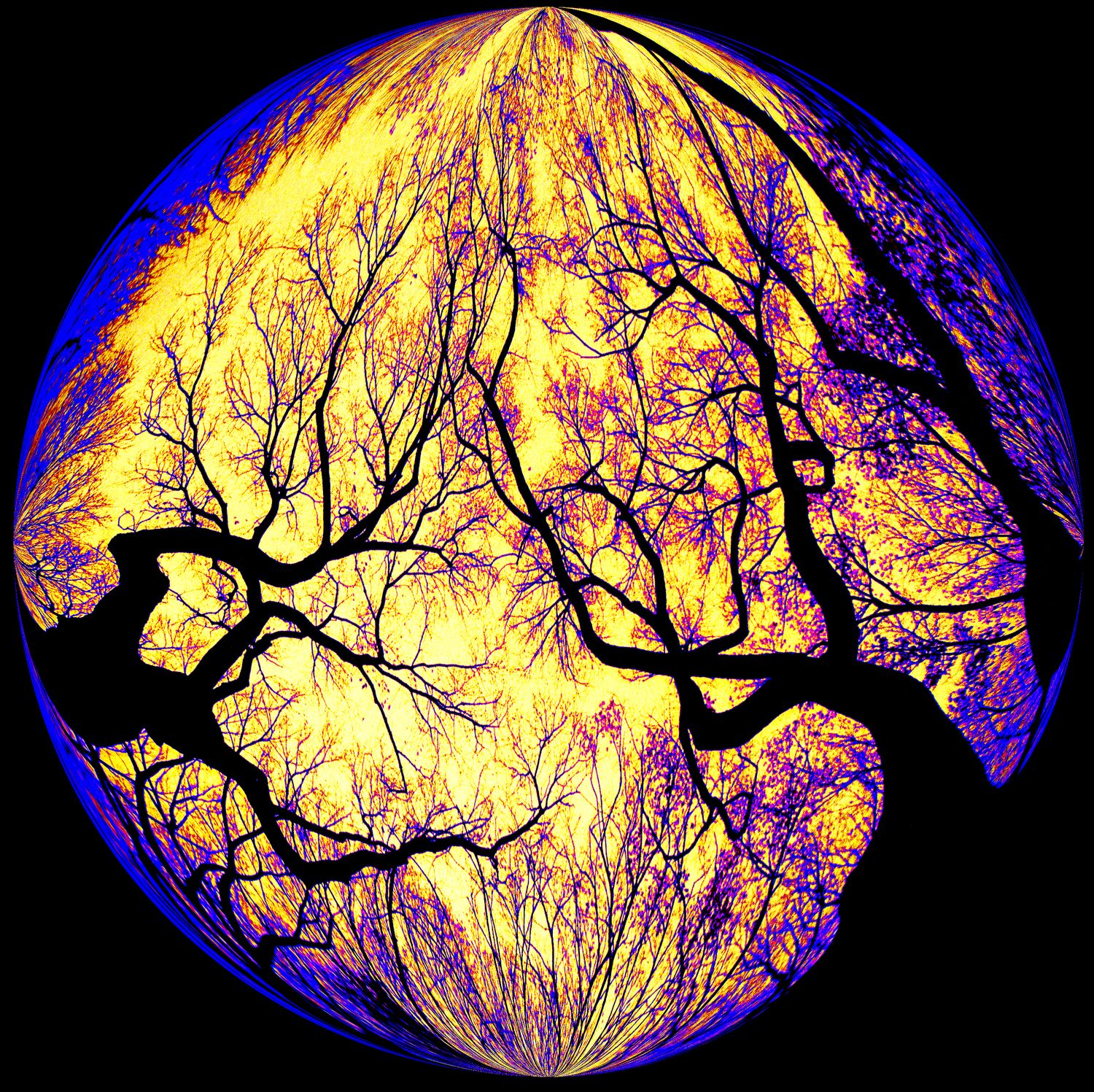 -  Haunted trees inside a bubble - Bubble Pictures - made with Wilkington-Smythe