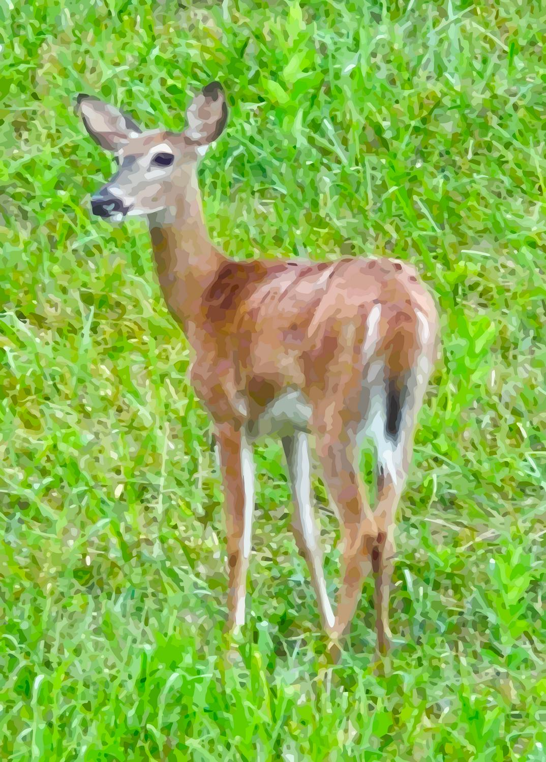 - A young deer keeps an eye on us - - art  - photography - by Tony Karp