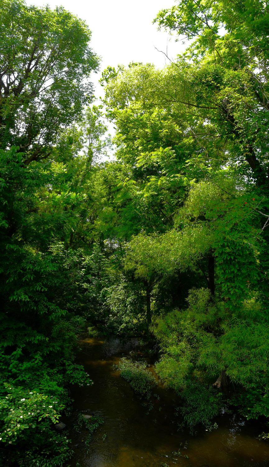- A vertical panorama showing the trees along the banks of Chestnut Lick - Panasonic DMC-FZ18 - - art  - photography - by Tony Karp
