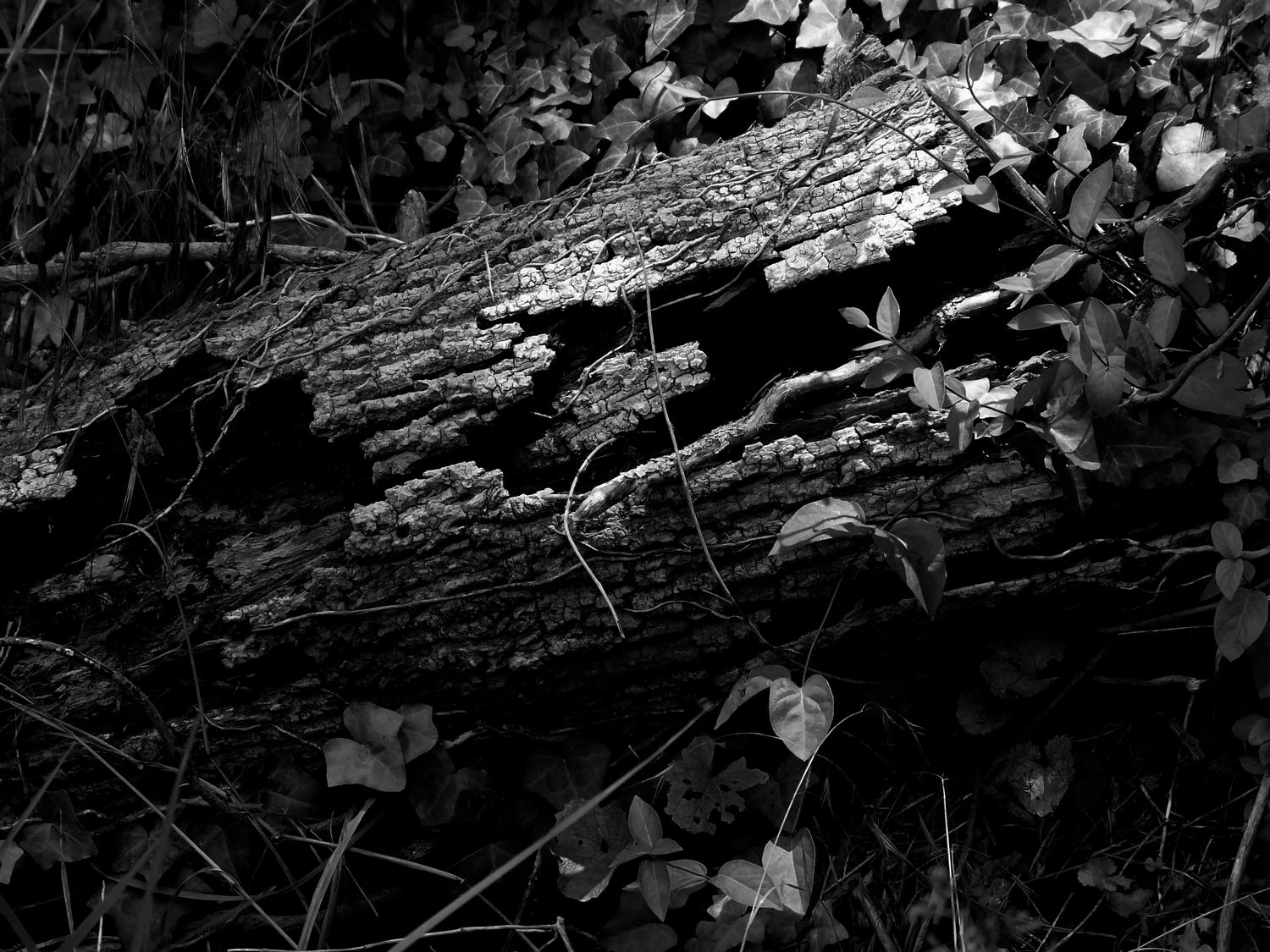 - Here's the old log in dynamic black and white - Panasonic DMC-FZ18 - - art  - photography - by Tony Karp