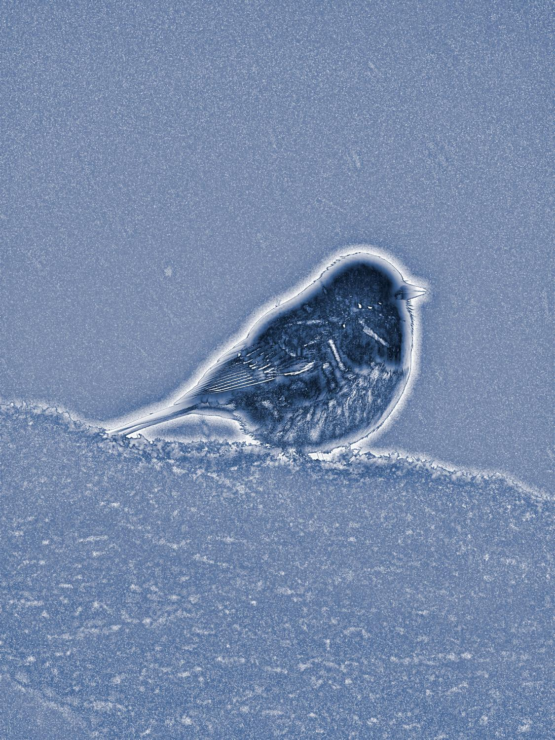 -  Panasonic DMC-FZ18 - Puffy blue bird in the snow - - art  - photography - by Tony Karp
