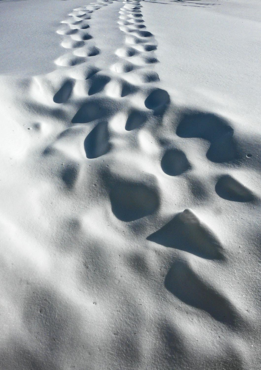 tracks in the snow-  Panasonic DMC-FZ18 - This is what snowbound really looks like. - - art  - photography - by Tony Karp