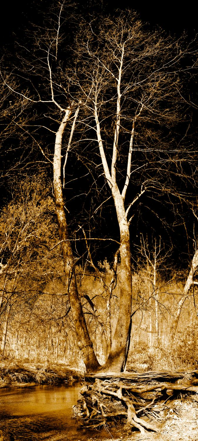- Scoured tree at Bull Run - - art  - photography - by Tony Karp