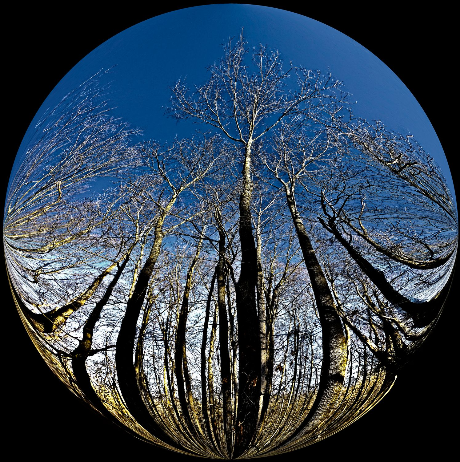 -  The trees in our neighborhood exist in a bubble - Bubble Pictures - made with Wilkington-Smythe