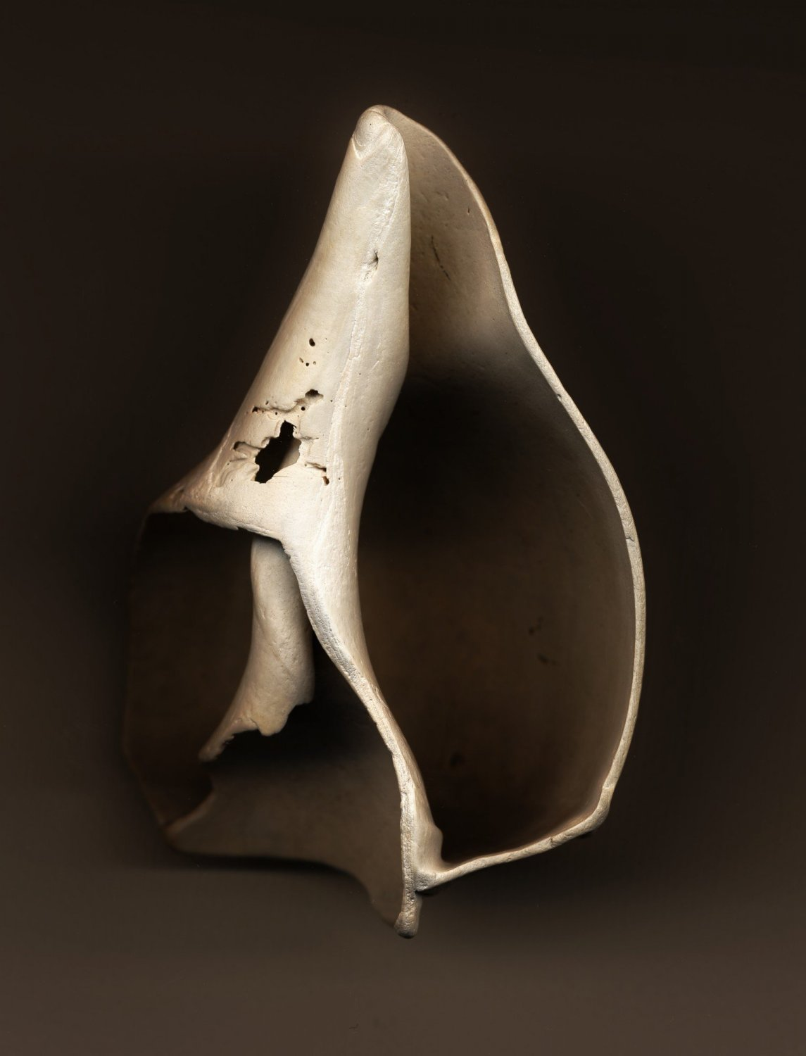 - Still life of a broken shell - My pictures taken in my studio - - art  - photography - by Tony Karp